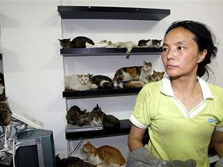 Duo Zirong stands with cats she helped rescue from a truck, in her home in Shanghai, China.