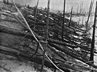 Millions of downed trees ringed the Tunguska site for years after the 1908 explosion.