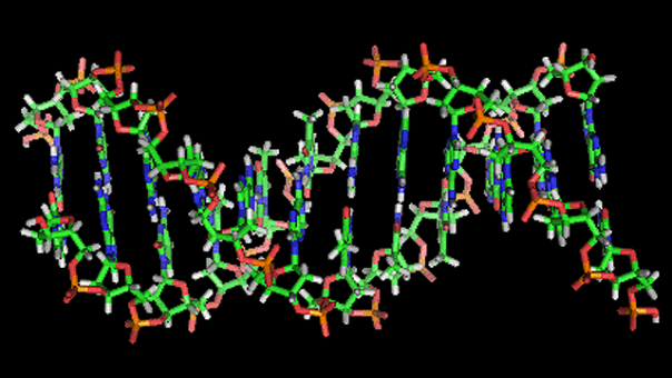 An illustration of the double-helix structure of a strand of DNA, made up of pairs of genes -- one of which may affect political ideology, researchers have said.